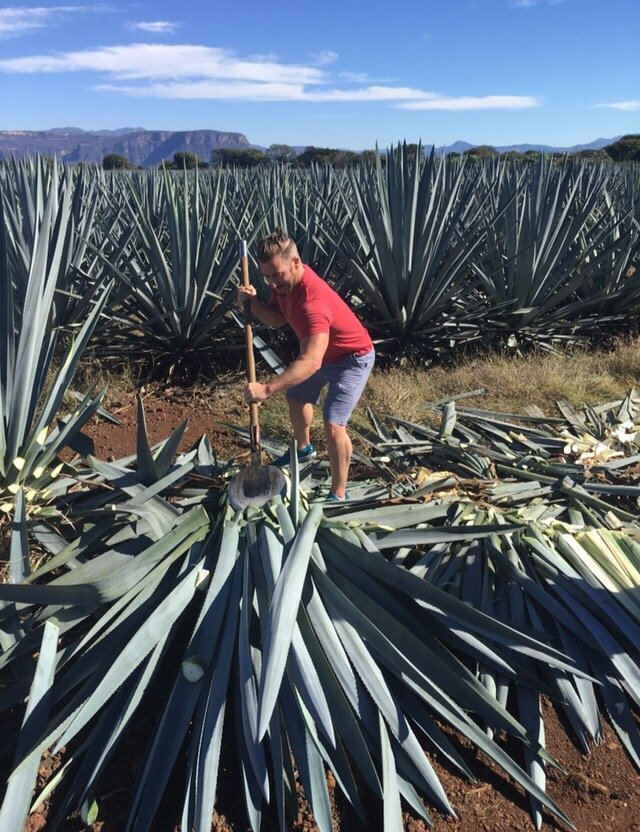 Tequila Mexico in Agave Fields